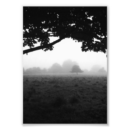 Morning Fog Emerging From Trees Art Photo
