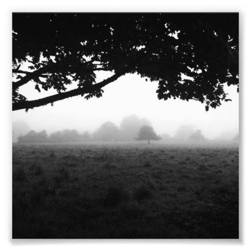 Morning Fog Emerging From Trees Photo Art