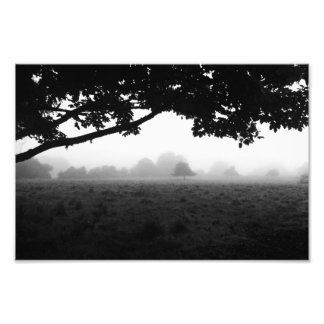 Morning Fog Emerging From Trees Photo