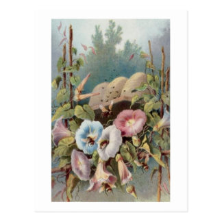 Morning Glories Postcard