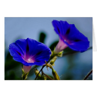 Morning Glory and meaning Card
