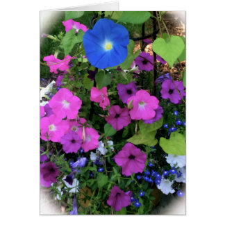 Morning Glory Blank Greeting Card