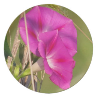 Morning Glory Flowers Floral Garden Plate