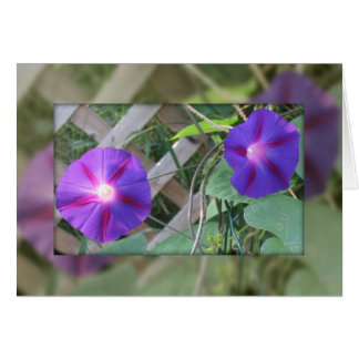Morning Glory Note Card