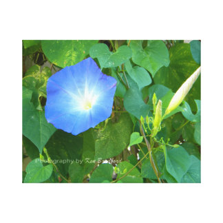 Morning Glory of Tennessee Canvas Print