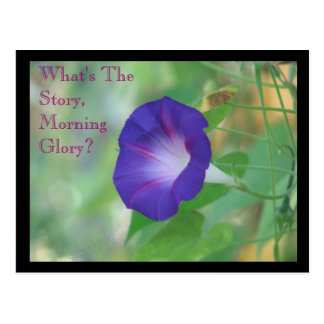 Morning Glory Postcard