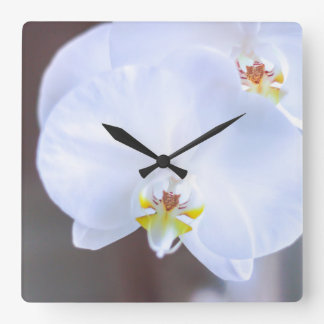 morning glory square wall clock