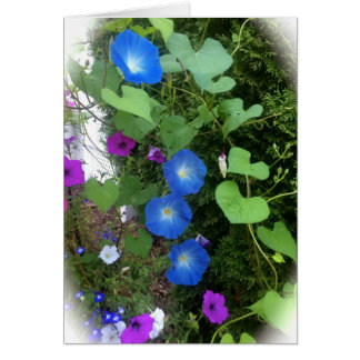 Morning Glory Summer Blooms Blank Greeting Card