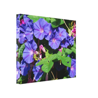 Morning Glory Vine Wrapped Canvas