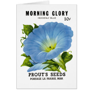Morning Glory Vintage Seed Packet Card