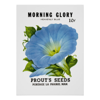 Morning Glory Vintage Seed Packet Poster