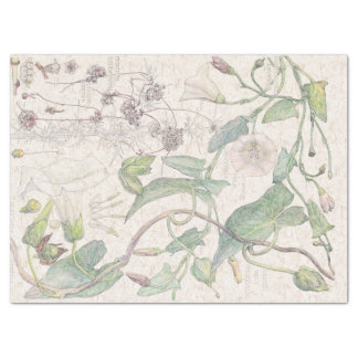 Morning Glory Wildflower Flowers Tissue Paper
