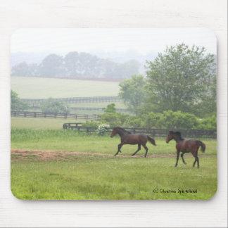 Morning Horses running Mousepad