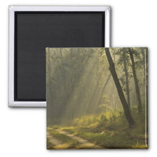 Morning light beams through trees in jungle square magnet