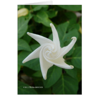 Morning of the Moonflower Card