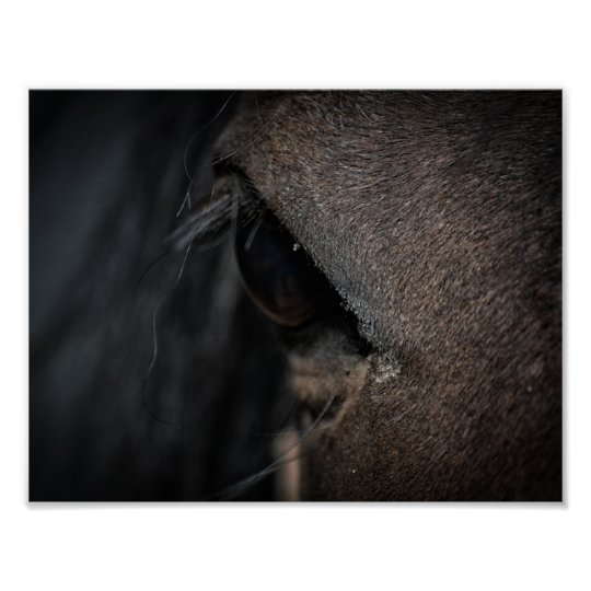 Morning Stallion Poster