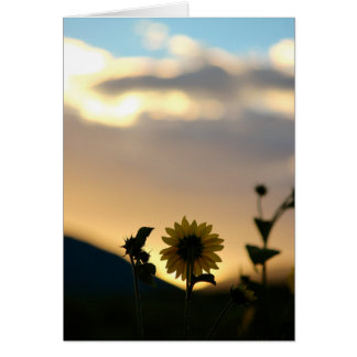 Morning Sunflower Card
