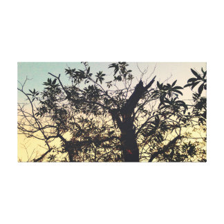 Morning Tree Canvas Print