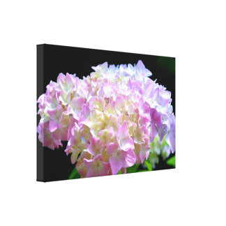 Morning Whhisper  Hydrangea Canvas Print