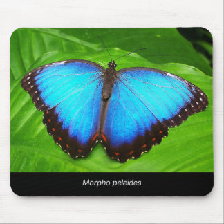 Morpho peleides mouse pad