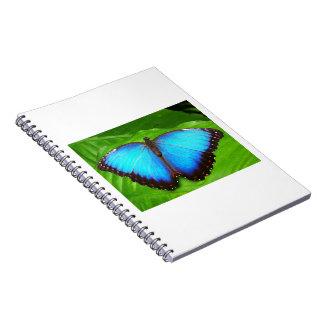 Morpho peleides spiral notebooks