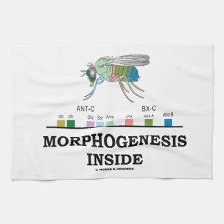 Morphogenesis Inside Drosophila Fruit Fly Genes Kitchen Towel