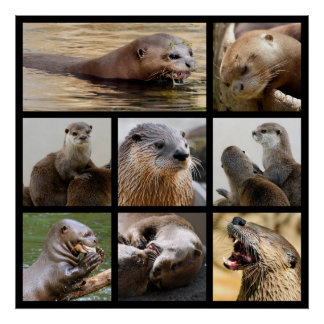 Mosaic photos of otters poster