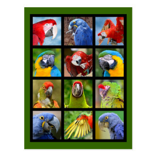Mosaic photos of parrots postcard