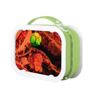 mosquito explorer lunch box