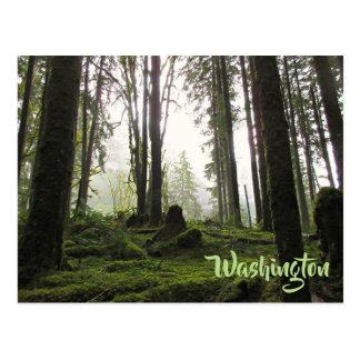 Moss covered forest in the Pacific Northwest Postcard