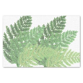 Moss Green ferns Tissue Paper
