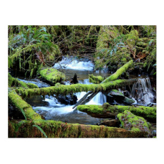 Moss-laden Branches Over Munson Creek Postcard