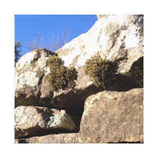 Moss on Rock Canvas Print