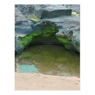 Moss, rocks and puddle greeting card postcard