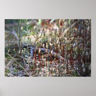 Moss Sporophyts Poster