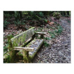 Mossy Bench Nature Trail in Olympic National Park Photograph