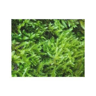 Mossy Canvas