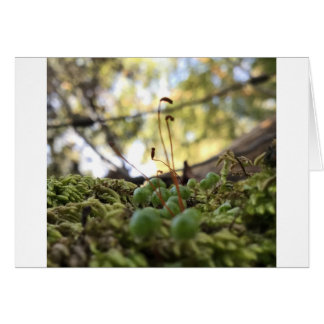 Mossy Grace Card