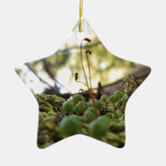 Mossy Grace Ceramic Star Ornament