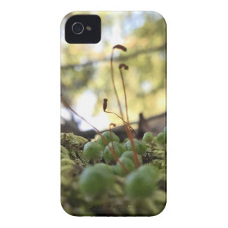 Mossy Grace iPhone 4 Cover
