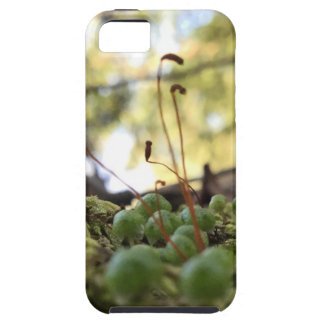 Mossy Grace iPhone 5 Cases