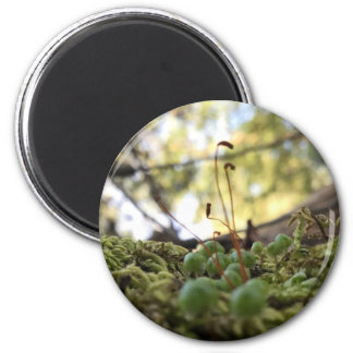 Mossy Grace Magnet
