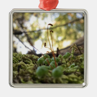 Mossy Grace Silver-Colored Square Ornament