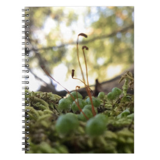 Mossy Grace Spiral Note Books