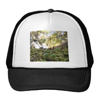 Mossy Grace Trucker Hat