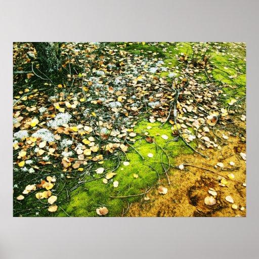 Mossy Ground in Fall Art Photo Print