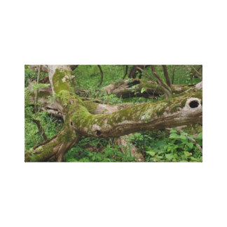 Mossy knoll canvas print