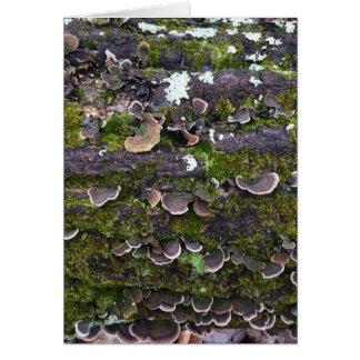 mossy mushroom fun card
