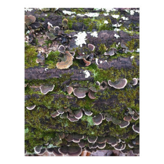 mossy mushroom fun letterhead