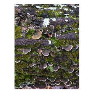 mossy mushroom fun postcard